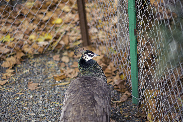 Close-up of bird on fence