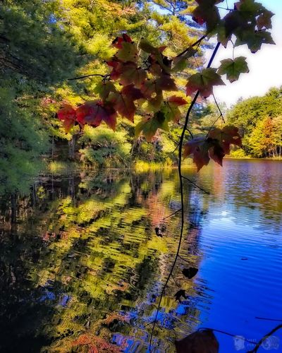 It's beginning to look like that time of year again. 🍁 Water Nature Tree Reflection Beauty In Nature No People Day Growth Tranquility Outdoors Lake Scenics Sky EyeEm Best Shots - Nature EyeEm Nature Lover EyeEm Best Shots Tree Vibrant Color New England