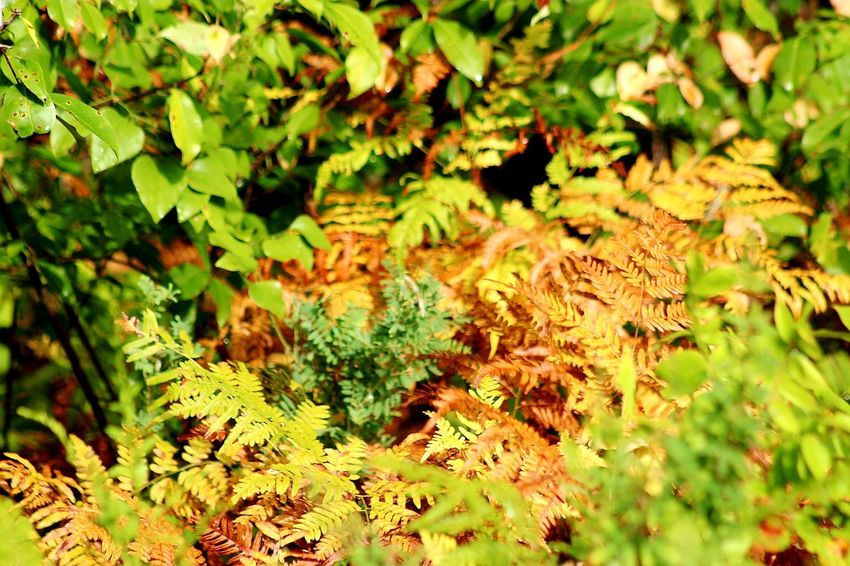 where the red fern grows Fern Leaf Backgrounds Pattern Close-up Plant Growing Leaves Fall Autumn Leaf Vein Young Plant