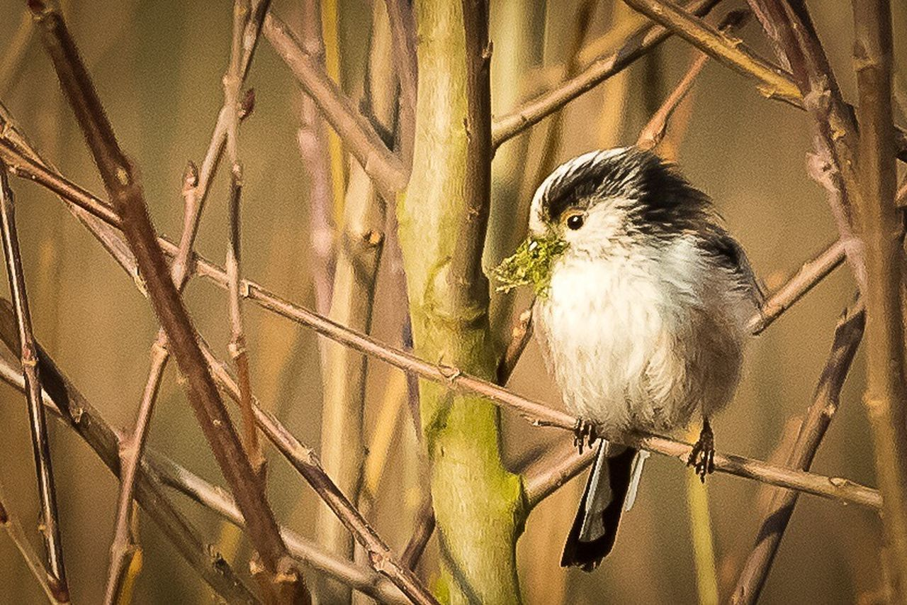 one animal, bird, animal themes, animal wildlife, animals in the wild, perching, no people, looking at camera, outdoors, portrait, day, nature, branch, close-up, bird of prey, mammal