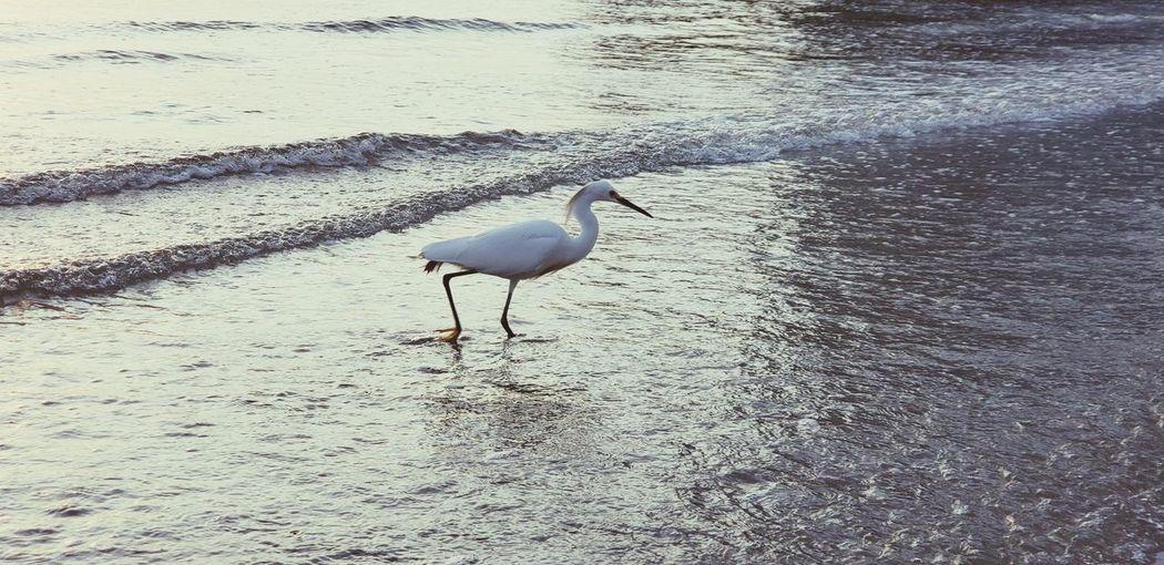 Tranquilidade. Photo taken with Galaxy S9 Plus Bird Flamingo Water Beach Wading Animal Themes Water Bird