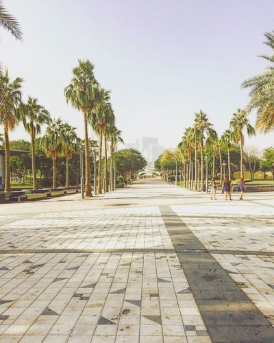 Footpath amidst palm trees in city against clear sky