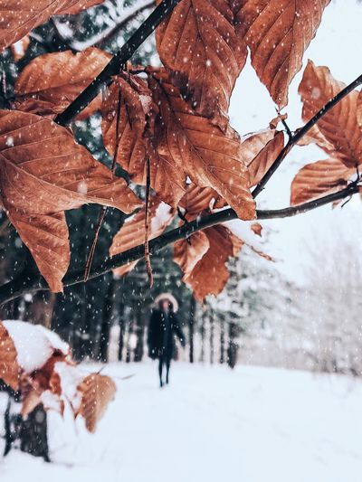Dry leaves on tree over snow covered field with woman walking during winter