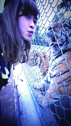 Kiss Me kiss me kiss me😍 you are so adorable Tiger Photoofday Dailyphoto