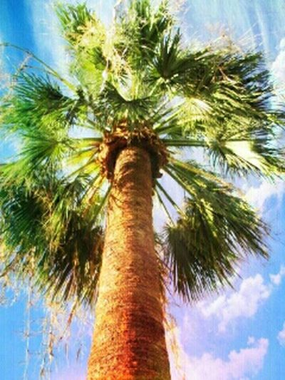 Palm Trees California Twentynine Palms Desert First Eyeem Photo