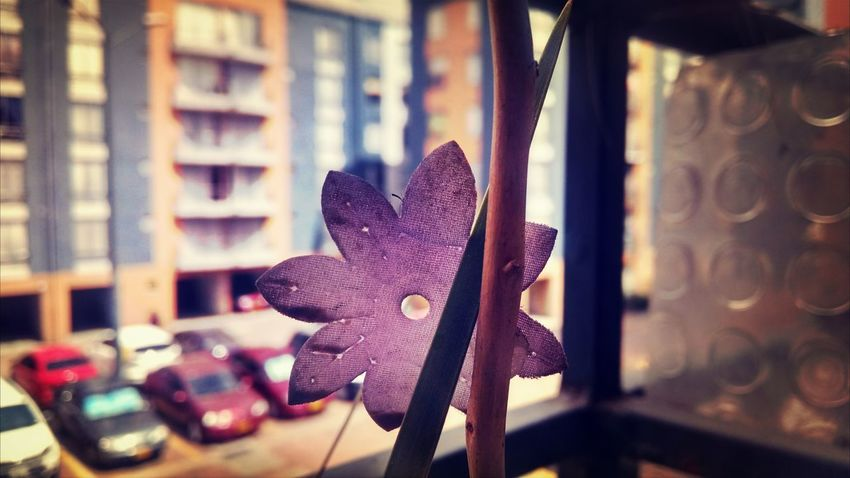 Flower Calidad
