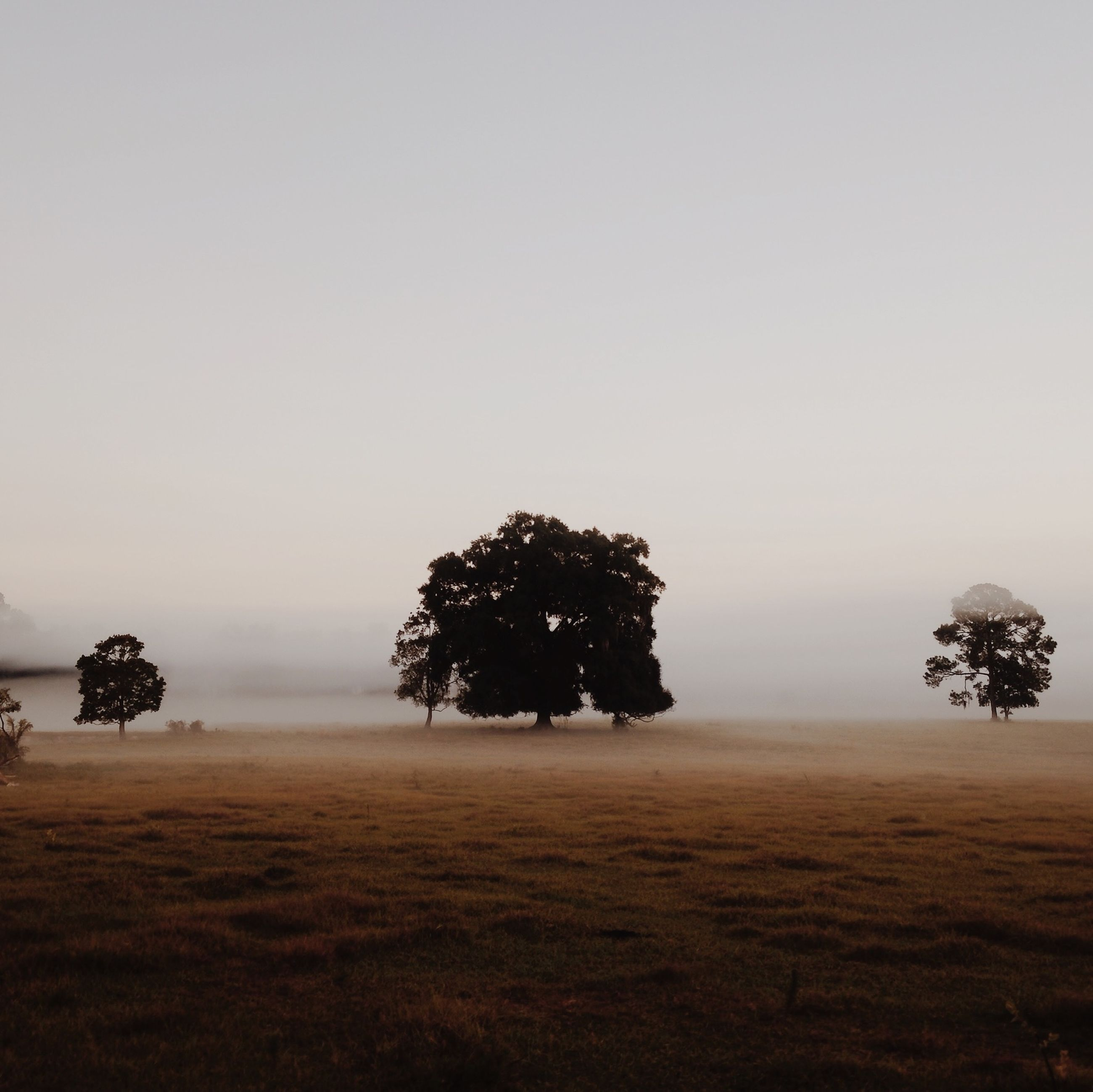 tree, tranquil scene, tranquility, copy space, clear sky, landscape, beauty in nature, field, scenics, nature, growth, weather, sky, foggy, non-urban scene, silhouette, idyllic, grass, outdoors
