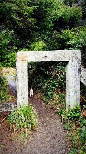 Trail My