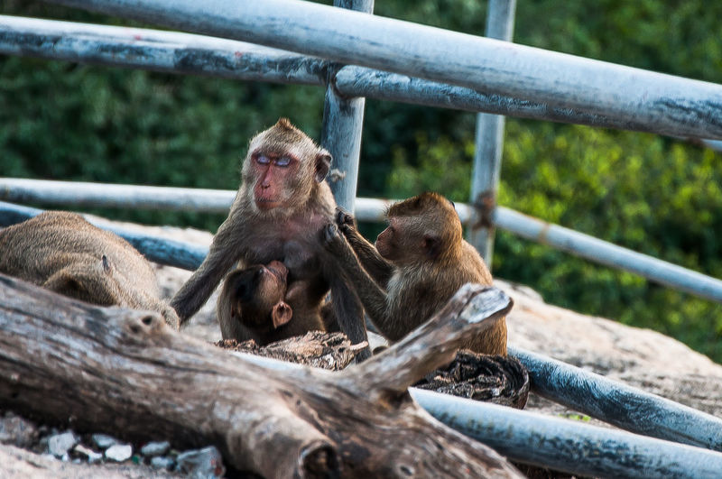 Monkey sitting on wooden railing