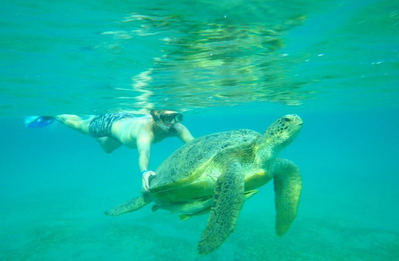 Nature Life Turtle Face Of Turtle Read Sea Море Sea Water Africa People One Person EyeEmNewHere Let's Go. Together. Sommergefühle EyeEm TOA 2017 Breathing Space EyeEm Ready