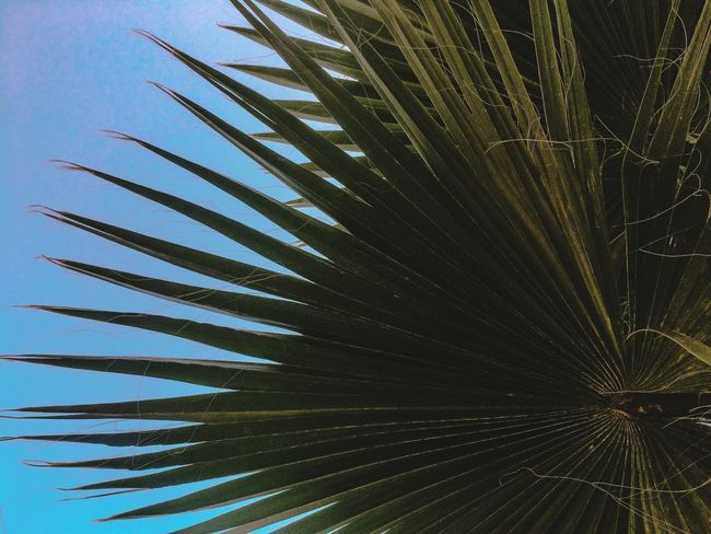 Just a photo - just a palm Palm Sky Sochi First Eyeem Photo EyeEmNewHere