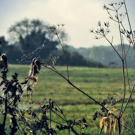 Foggy Morning Autumn Colors Plants Nature Skyporn Silhouette Landscape #Nature #photography