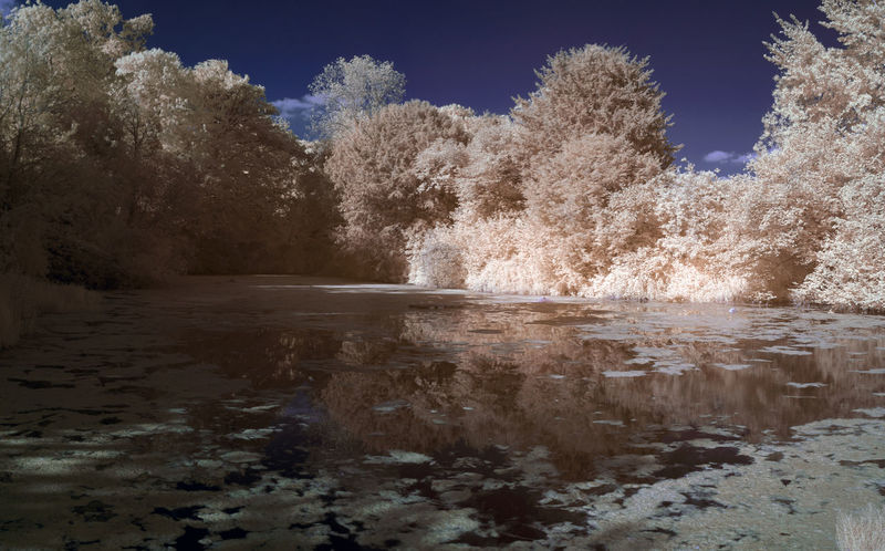 Abstract Golden Infrared Infrared Photography Ir Photography Pond Reflection Water