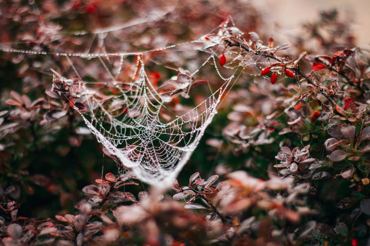 Beautiful Autumn Autumn Berries DSLR Zsebők Edina Photography Autumn Beauty In Nature Canon 70d Close-up Cold Colorful Details Fall Flower Foggy Morning Growth Macro Nature No People Outdoors Plant Spider Web Web Lost In The Landscape