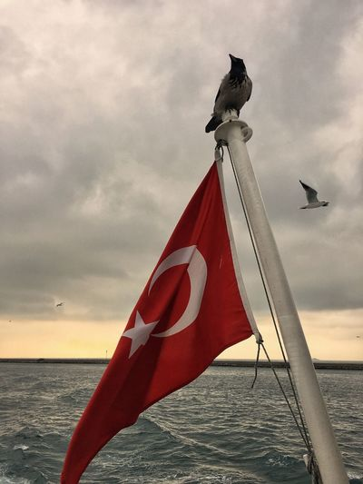 Pride. Over The Sea Bird Nationalism Honor Patriotic, Patriot, Flag, American Flag, Honor, Respect Patriot Black Sea Raven Turkey Sky Cloud - Sky No People Water Red Horizon Over Water Outdoors Wind Pride