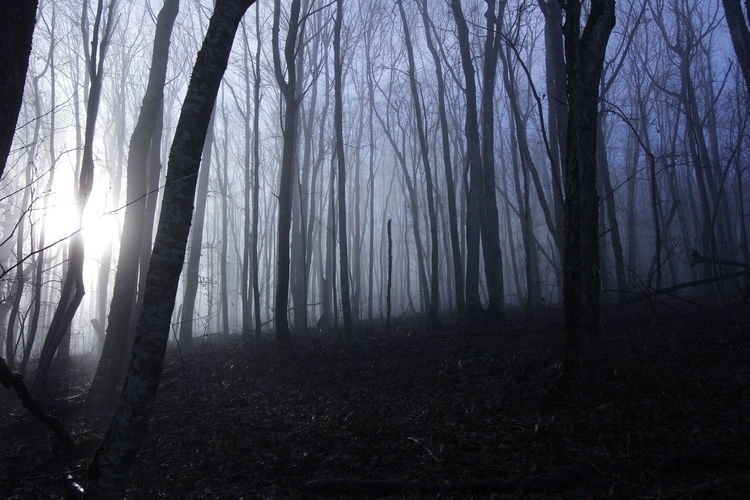 Misty forest in the foothills of the Caucasus. Krasnodar region. Late fall. Tree Forest Land Plant Trunk Tree Trunk WoodLand Tranquility Beauty In Nature Nature Scenics - Nature No People Tranquil Scene Non-urban Scene Fog Bare Tree Landscape Environment Sky Outdoors Streaming Mystic Misty Foothills Caucasus