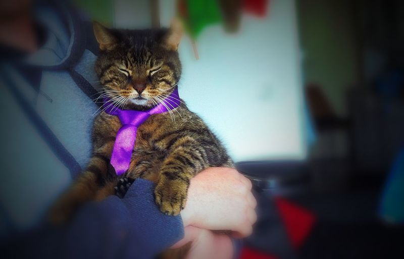 Happy Birthday! ShooShoo! Cats cat get as old as 27. He is 17yearsold however. Your Tie for one day looks amazing Old Chap