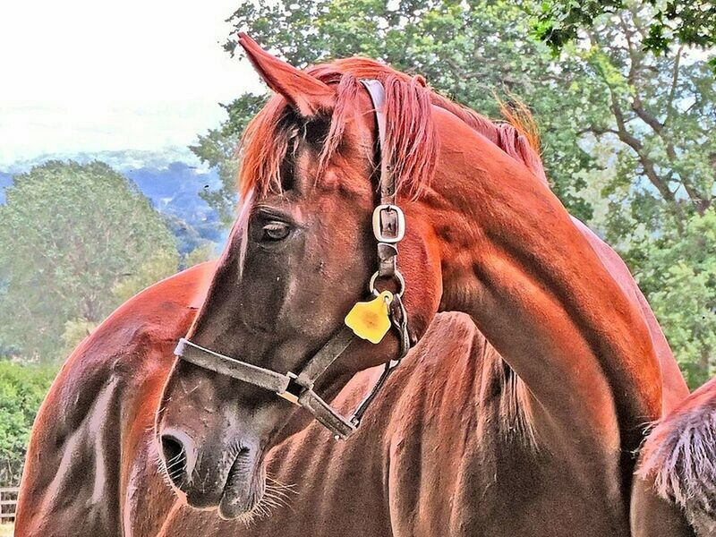 Relaxing Enjoying Life Life's Simple Pleasures... Eeyem Nature Lover Beauty In Nature Majestic Portraits Taking Photos Horse PortraitPhotography Horselife Horsehead Horse <3 Animalphotography Animalposing Beauty