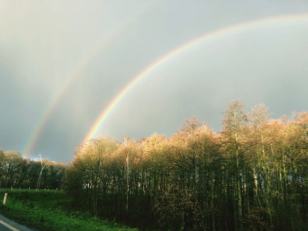 Dubble rainbow Rainbow Double Rainbow Nature Beauty In Nature Tranquility Scenics Tranquil Scene Tree Sky Day No People