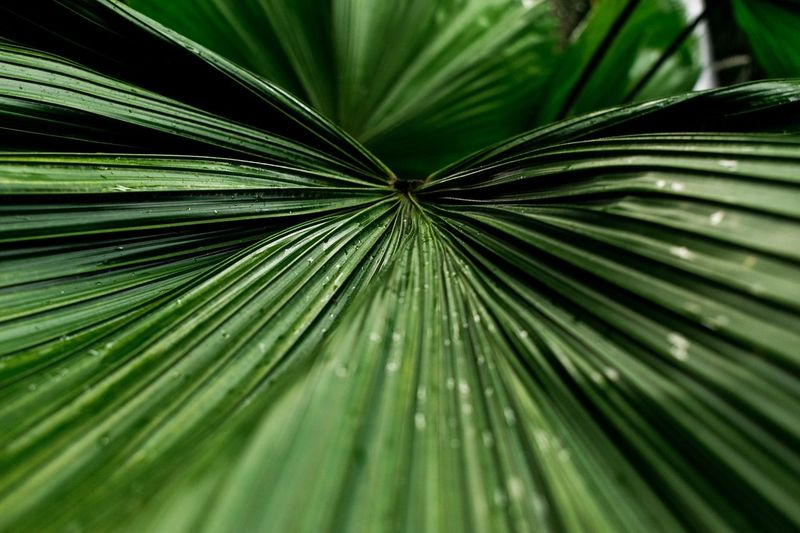 Botanic Garden Glasgow  Organic Nature Shapes In Nature  Lines Growth Leaf Green Color Plant Part Plant No People Close-up Pattern Beauty In Nature Nature Natural Pattern Selective Focus Tree