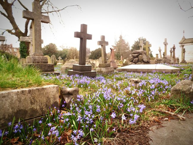 Cemitery Brompton Cemetery Flowers Flower EyeEm Best Shots Rustic Medieval Vitoriano Photography London