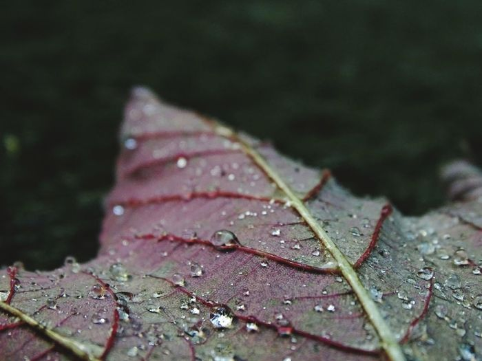 Leaf Wet Nature