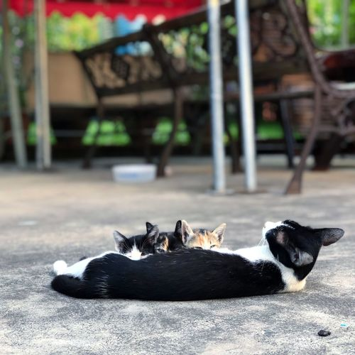 Cats Cats Of