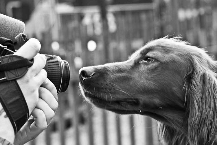 Close Up Of Woman Photographing Dog