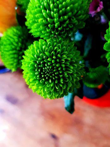 EyeEm Selects EyeEm Best Shots EyeEmNewHere EyeNatureLover Flower Head Flower Close-up Plant Green Color Plant Life Succulent Plant Botanical Garden