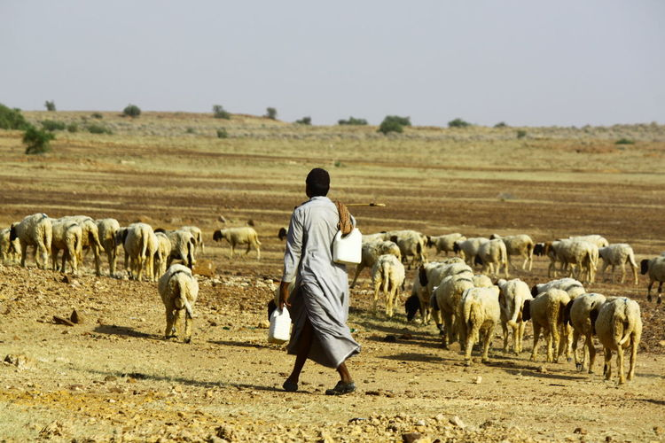 View Of Shepherd With Sheep On Barren Landscape