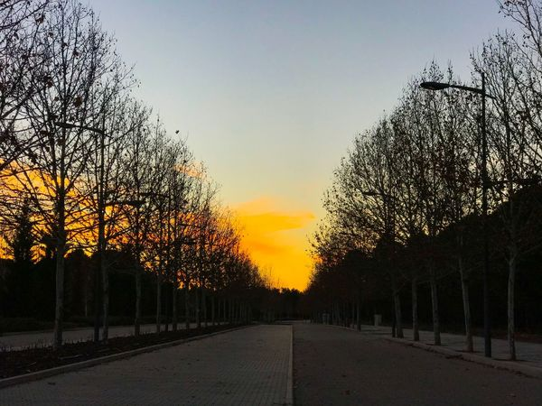 Solitary Moments Street Solitary Place No People Solitude Silence Sunset Landscape Pathway The Way Forward Way Geometric Architecture Geometry Urban Geometry Urban Cityscape Environment Avenue Of Trees Avenue Sunset Tree The Way Forward Orange Color Road Scenics Tranquil Scene Nature Tranquility Outdoors Bare Tree