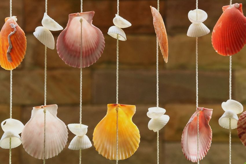 Hanging No People Seashell Shell Collection Shell Art Shell Photography Shells🐚 Shell Hanging