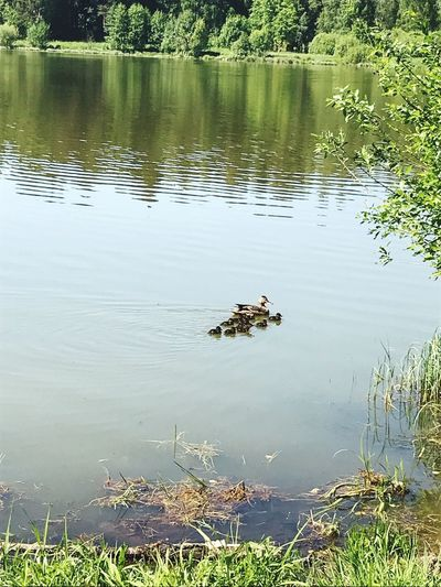 High angle view of ducks floating on lake
