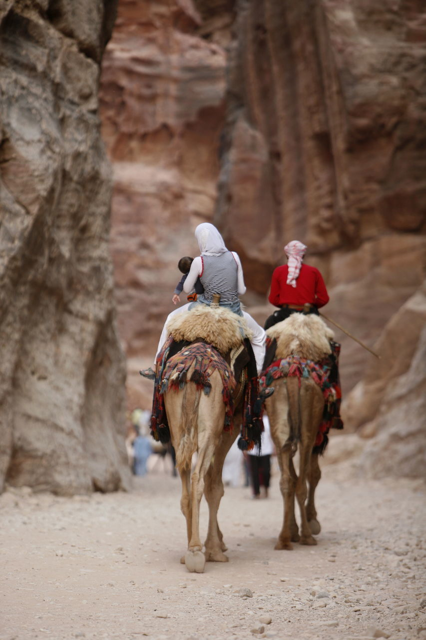 Rear View Of People Riding Camel