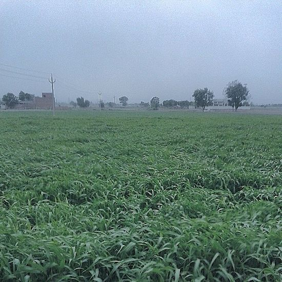 Cold wind blows Monsoon Coldwind Indianfarm Yay awesome thunder