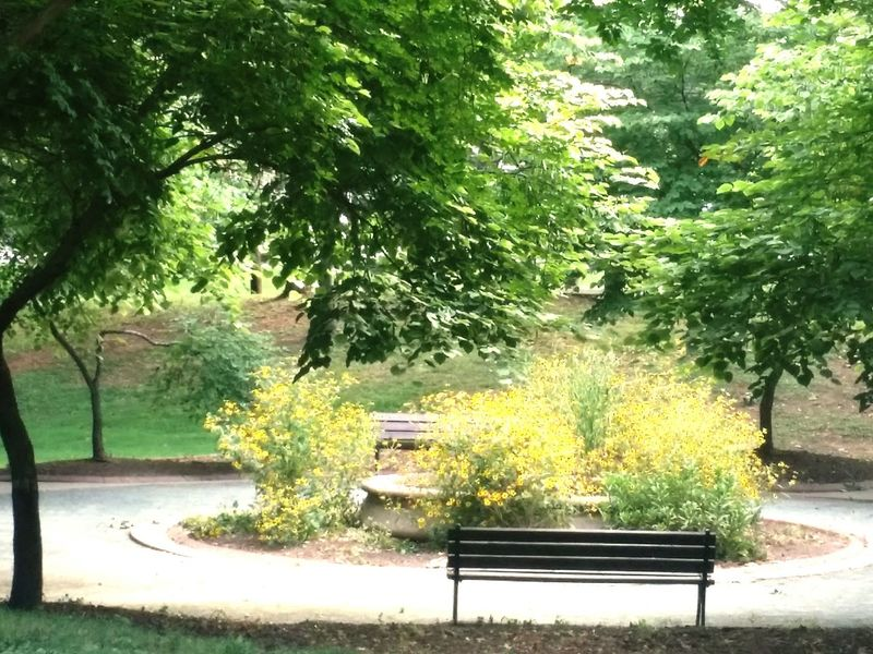 Park flowers trees spring benches peace summer