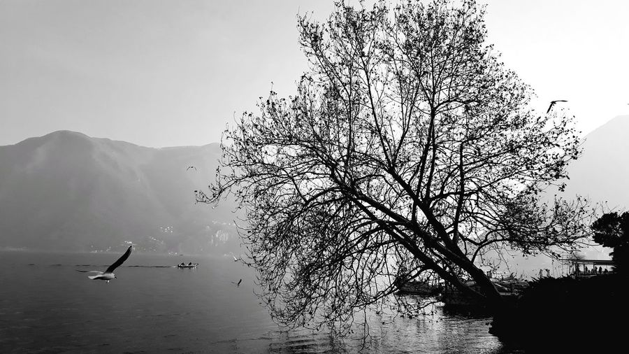 Shilouette EyeEmNewHere Lugano Blackandwhite Shillouette Animals In The Wild Animal Themes Animal Wildlife Animal Day Bird Nature Sky Group Of Animals Plant Tree Water Beauty In Nature Outdoors Flying Flock Of Birds My Best Photo