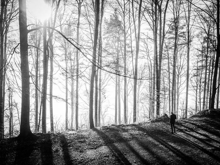 The same shot works nicely in black&white I think B&w Street Photography Showcase: December Enjoying The Sun Forest In The Forest Trees TreePorn Tree_collection  Nature Nature_collection EyeEm Nature Lover Naturelovers Light Sunlight Monochrome Monoart Blackandwhite Black And White Black & White Sunset_collection Light And Shadow Shadows My Best Photo 2015 Monochrome Photography