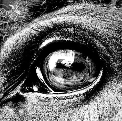 Horses Horseeye Horses Are My Life Eyes