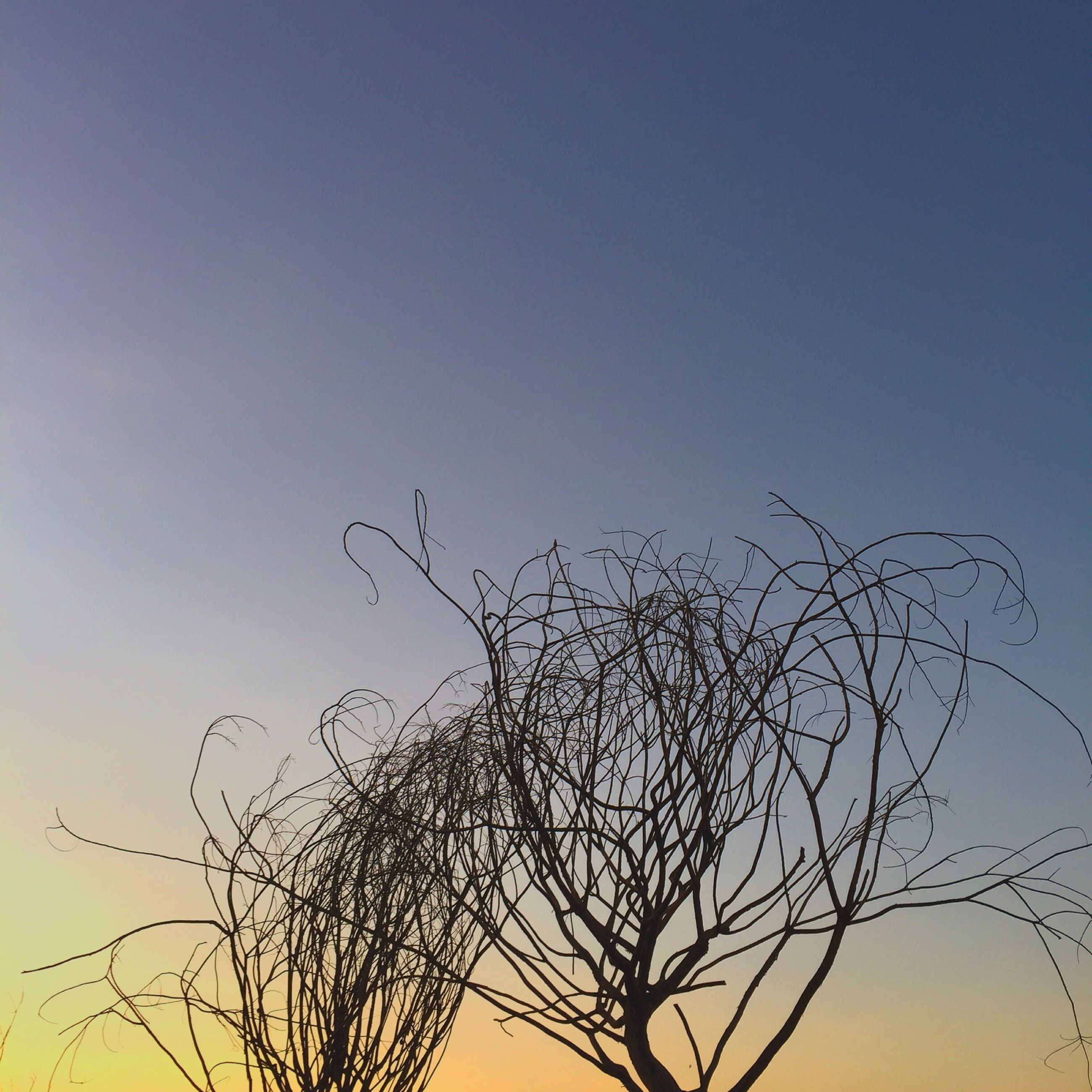 low angle view, bare tree, branch, clear sky, silhouette, tree, nature, tranquility, sunset, beauty in nature, copy space, scenics, sky, growth, high section, tranquil scene, outdoors, no people, blue, dusk