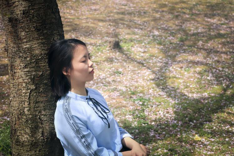 落樱尘林 Springtime