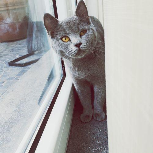 La dolcezza non è solo canina o umana. Adoro il suo sguardo quando la chiamo. Cat IPhoneography Iphoneonly