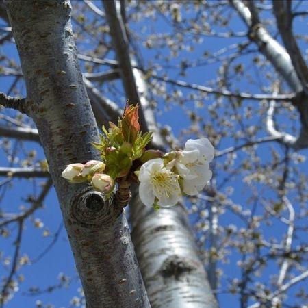 Bahar Benimkadrajim çiçek Allshots_