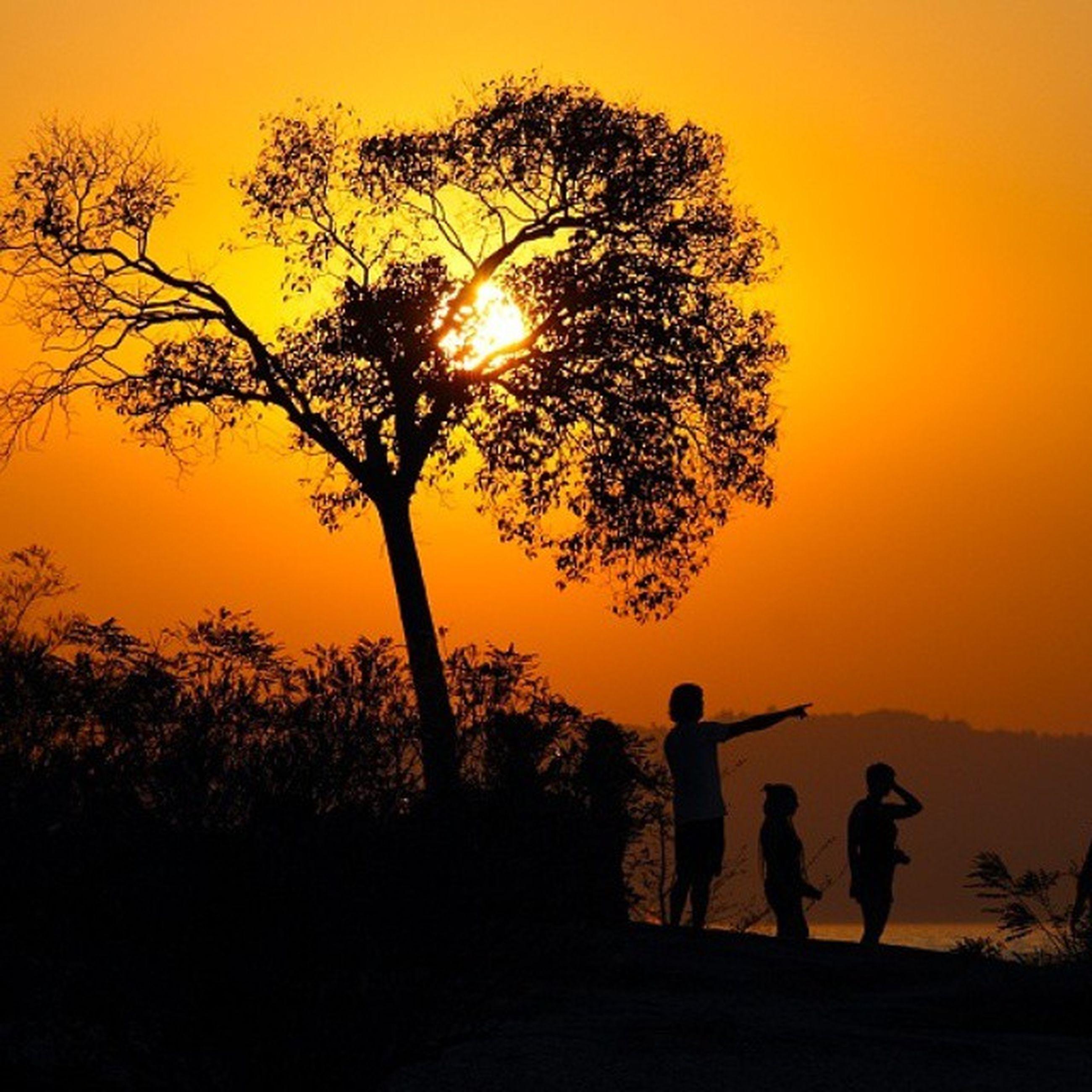 sunset, silhouette, orange color, sun, men, lifestyles, leisure activity, tree, beauty in nature, tranquil scene, scenics, tranquility, sky, nature, idyllic, person, standing