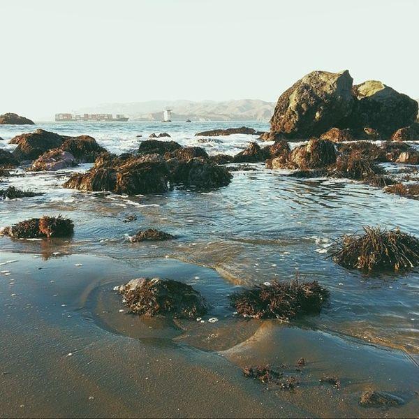 Hello ocean. Sanfrancisco LandsEnd California Milerockbeach vsco vscocam vscofilm