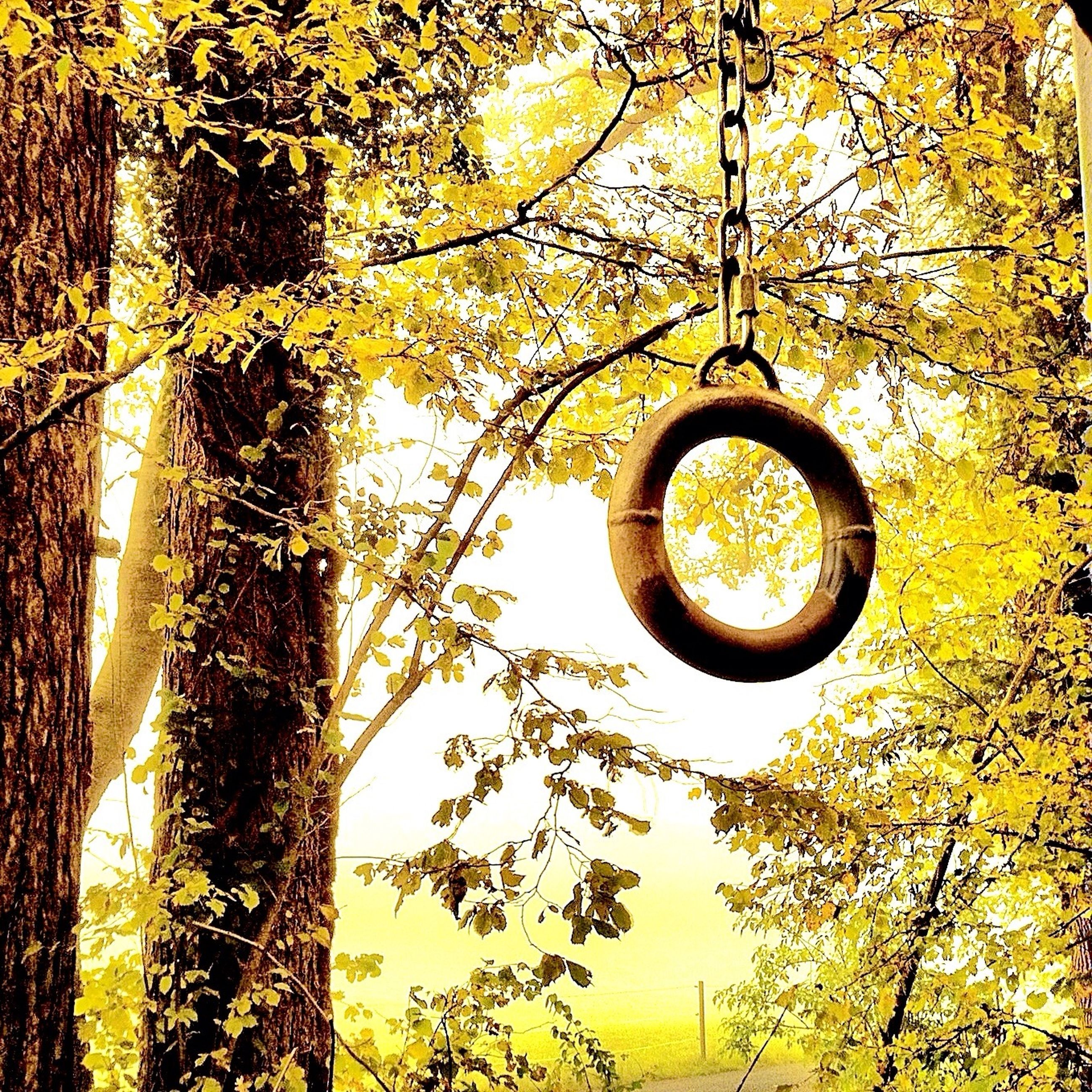 tree, yellow, low angle view, branch, circle, growth, close-up, nature, orange color, outdoors, no people, metal, lighting equipment, sky, protection, day, hanging, beauty in nature, safety, tranquility
