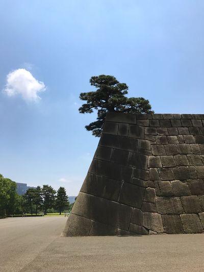 天守台(Tenshudai) Tenshudai Base Of Keep Edo Castle History Built Structure Stone Wall Tree Pine Tree Imperial Palace Remains Tokyo,Japan
