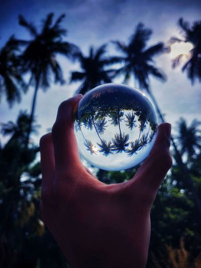 The whole new world Lens Ball Human Hand Tree Palm Tree Holding Close-up Sky Bubble Wand Blowing Bubble Gum Personal Perspective Bubble Birthday Candles Silhouette Human Finger Dandelion Bubble Bath