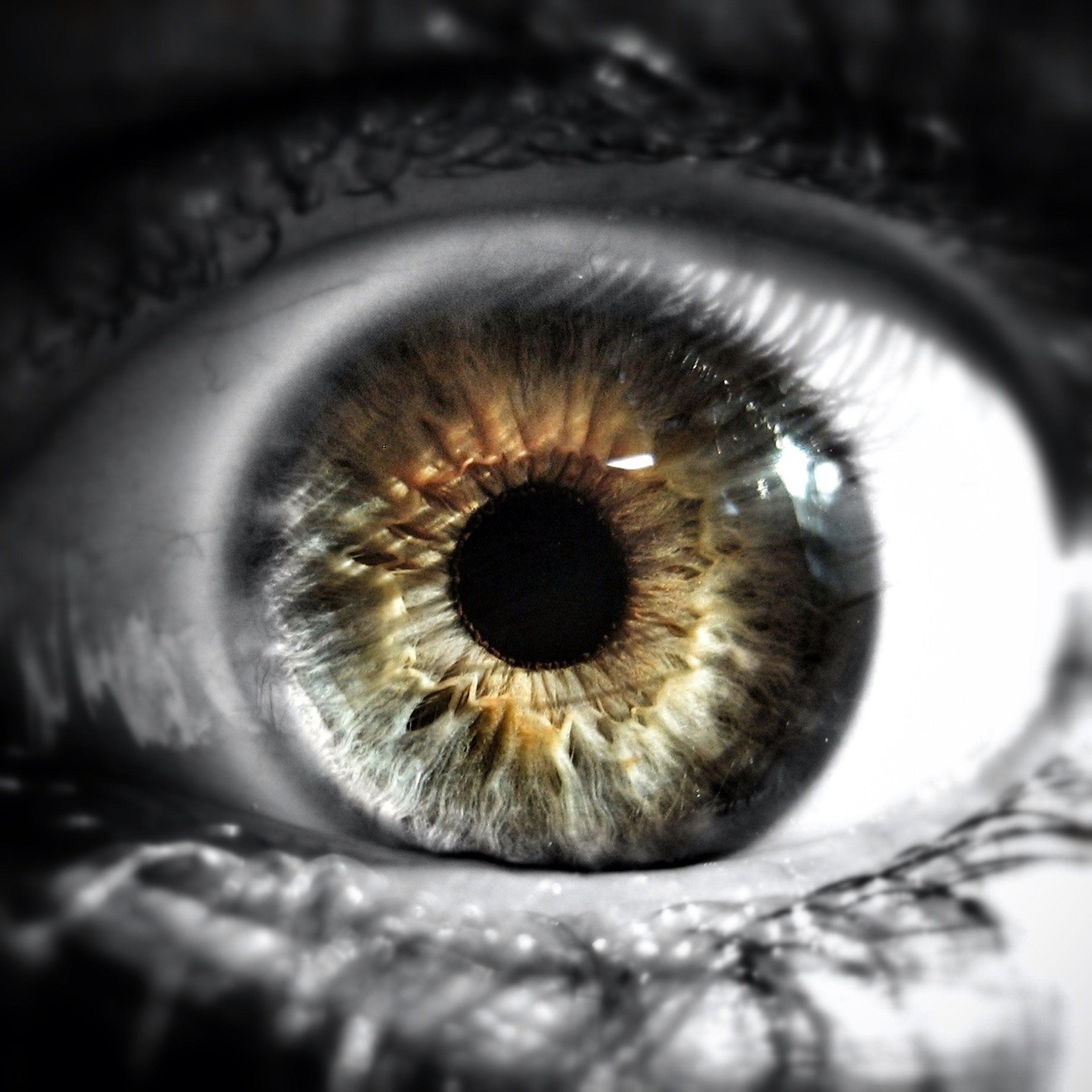 close-up, human eye, extreme close-up, selective focus, eyelash, sensory perception, eyesight, extreme close up, part of, macro, eyeball, indoors, detail, one animal, full frame, iris - eye, unrecognizable person