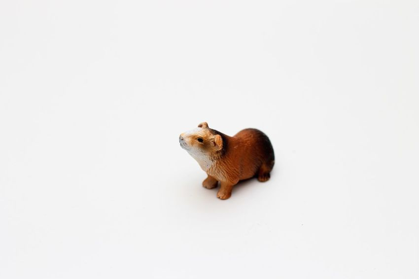 Schleichtiere Hamster Childrens Toys Hartgummi Spielzeug Schleich Schleich Animals Schleich Tiere Schleichtiere Schleichtiere Hamster Schleichtiere Nagetier Schleichtiere Rodent Schleichtiere Spielzeug Schleichtiere Toys Spielzeug Spielzeug Tiere Spielzeugfiguren Spielzeugfotografie Spielzeugtiere Toyphotography Toys